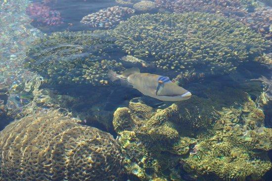 Underwater Observatory Marine Park : Красавчик!