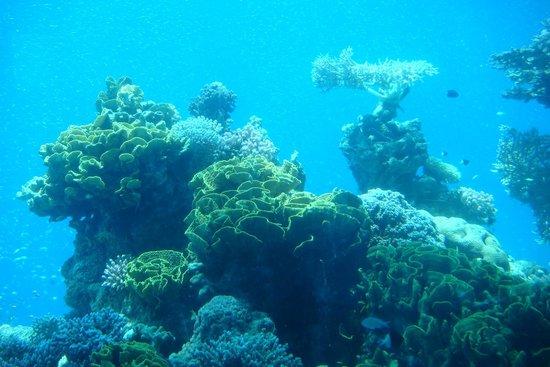 Underwater Observatory Marine Park: Кораллы на дне моря
