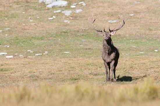 Wildlife Adventures: Escursioni nel Parco Nazionale d'Abruzzo Lazio e Molise
