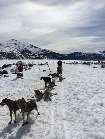 Dog Sledding On Norris Glacier With Era Helicopters