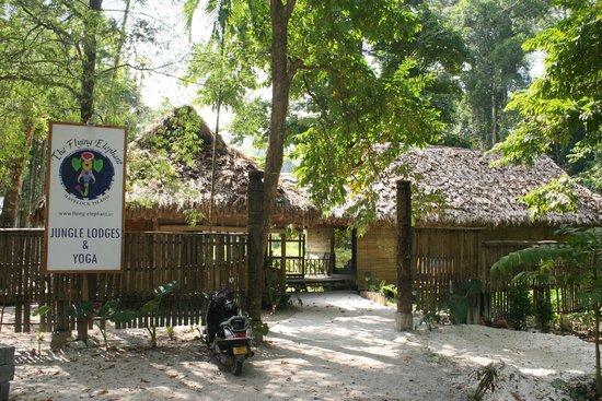 The Flying Elephant Havelock Island Andaman And Nicobar Islands