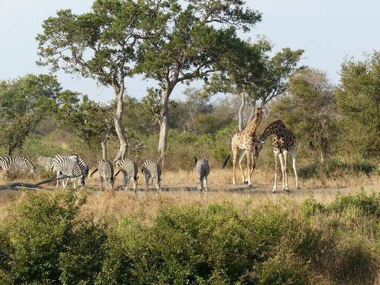 Umlani Bushcamp : Enjoying a drink at the Umlani watering hole.