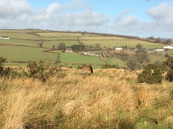 West Hollowcombe Self Catering Cottages: View of West Hollowcombe Cottages from Exmoor