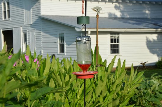 Big Mill Bed and Breakfast : Hummingbirds and Barn with some of the rooms