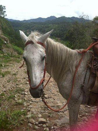 Los Establos Boutique Hotel: Horseback Riding