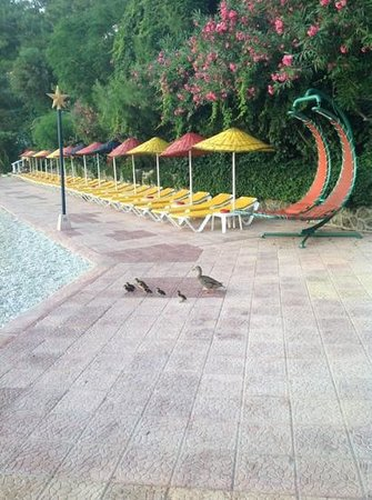Letoonia Club & Hotel: ducklings!