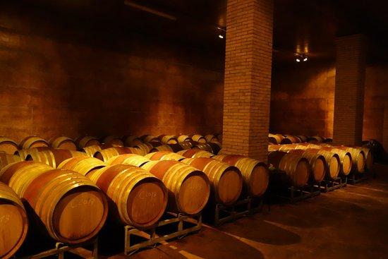 Tenuta Vitalonga: cellars