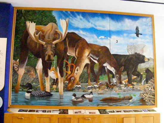 The Discovery Center : Fauna of the park