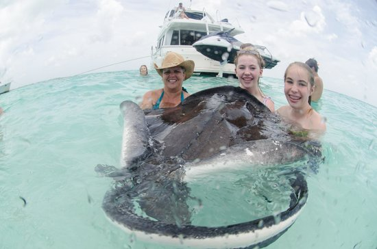 Cayman Private Charters : Stingray City