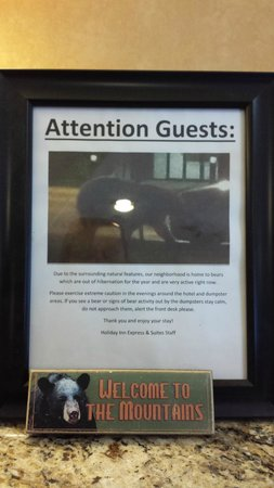 Holiday Inn Express & Suites Colorado Springs North: We never saw the bear!