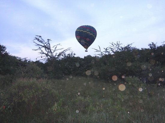 Fig Tree Camp : balloon safari