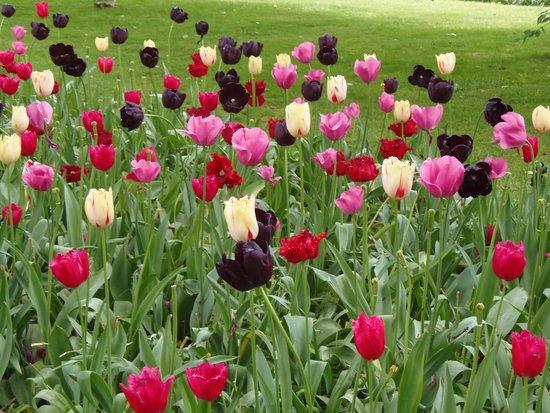 Keukenhof: Variedades de tulipanes