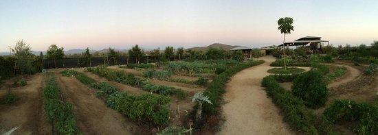 Cerritos Surf Town : Garden at Hierbabuena