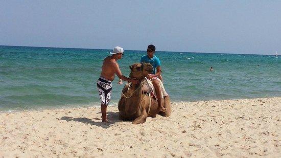 Vincci Flora Park: Beach/ Camel Rides Available