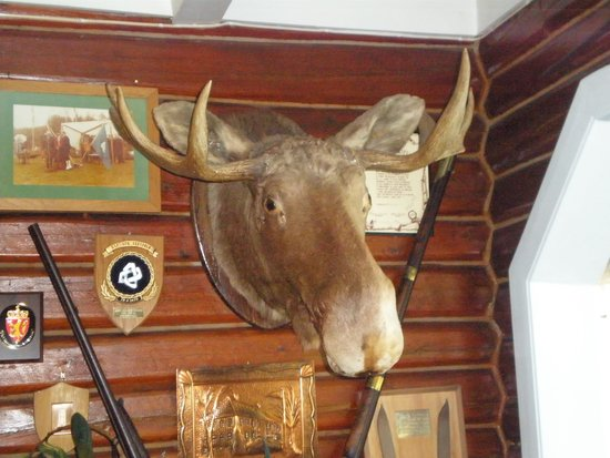 Quality Straand Hotel: Moose Head in historic part of hotel