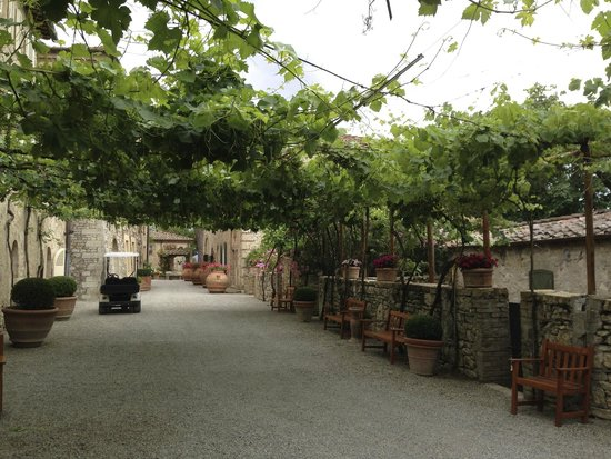Hotel Borgo San Felice: Grapevines covering the walkway