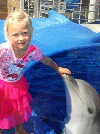 Calvia, Spanien: møde med delfinen