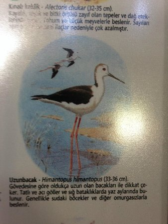 Sultan Palas Hotel: bird poster