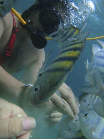 Ocean Adventures Bavaro Splash: SNUBA
