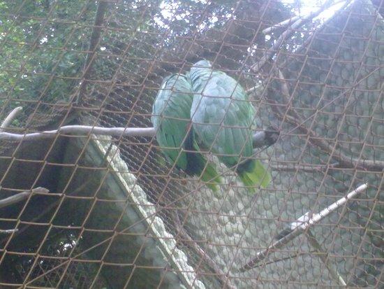 Zoologico de Americana: papagaios