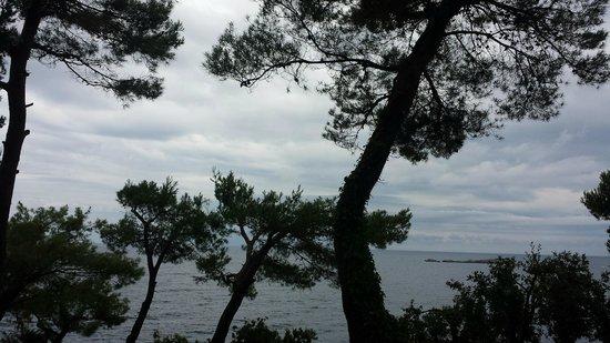Hotel Croatia Cavtat: More trees