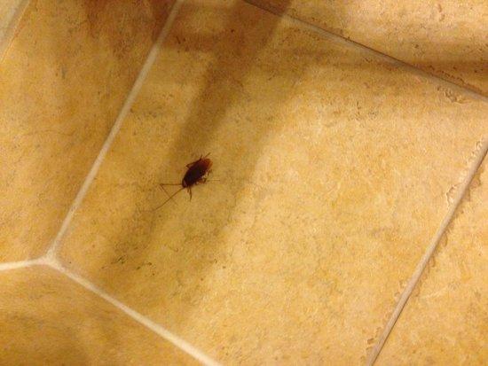 Omni Austin Hotel Downtown: Roach Deceased