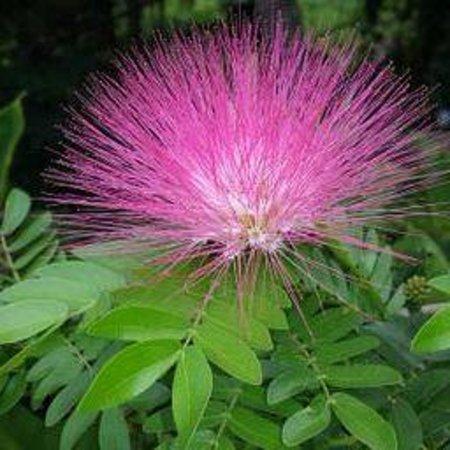 El Escondido Guest House : Botanical Tour B