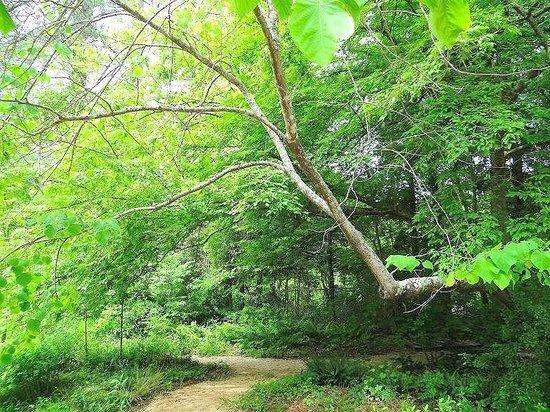 North Carolina Botanical Garden: path