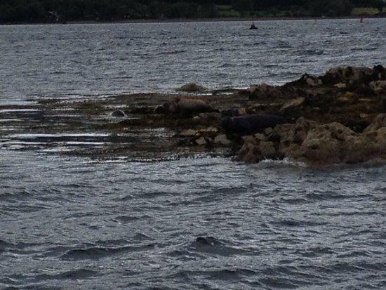 Seafari Cruises: Seals - but safe in their sanctuary