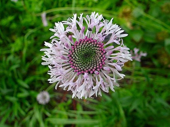 North Carolina Botanical Garden: flower with bumblebee