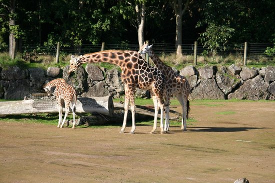 Auckland Zoo: Griffith & Zebra