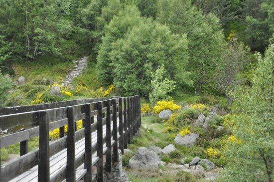 Cairngorm Reindeer Herd: hike