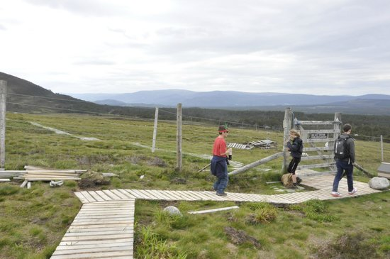 Cairngorm Reindeer Herd: feeding area