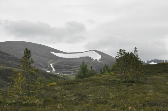 Cairngorm Reindeer Herd: Cairngorm Mnts