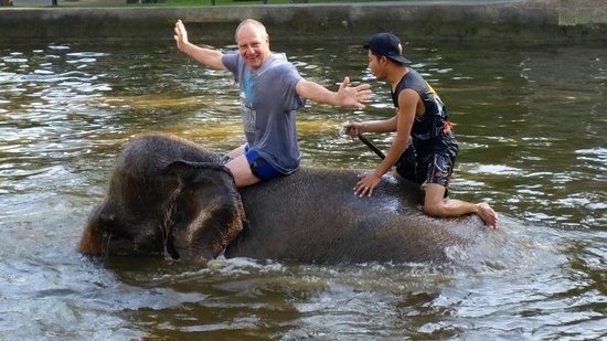 Elephant Safari Park & Lodge: Swimming with the elephants