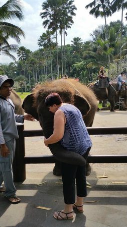 Elephant Safari Park & Lodge : So gentle