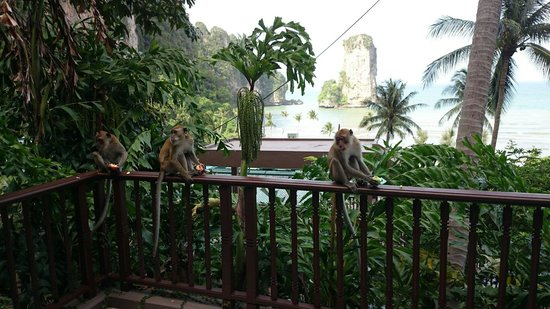 Centara Grand Beach Resort & Villas Krabi: Morning visit from the wild life on our terrace.