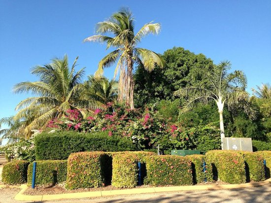 Blue Seas Resort: Garden