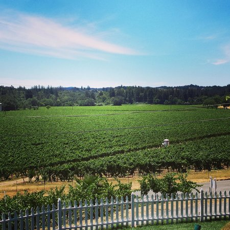 The Raford Inn Bed and Breakfast: Beautiful view of a vineyard!