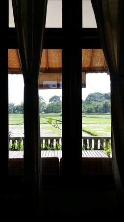 Tegal Sari: View from our window of Rice Fields