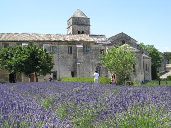 Saint-Paul de Mausole : Lavender behind the facility