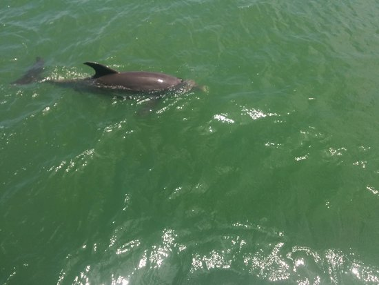 Dolphin Landings Charter Boat Center: Dolphin getting close to the boat