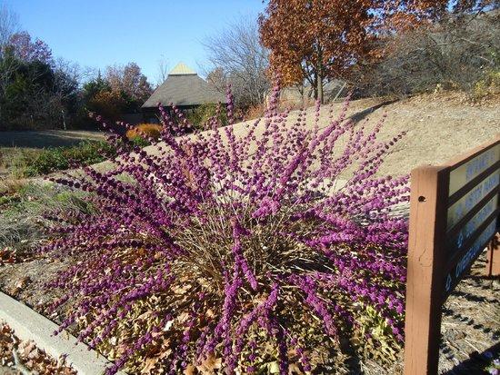 Runge Conservation Nature Center: pretty bush
