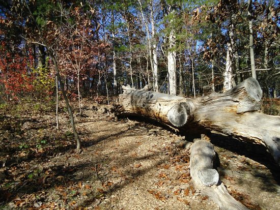 Runge Conservation Nature Center: log
