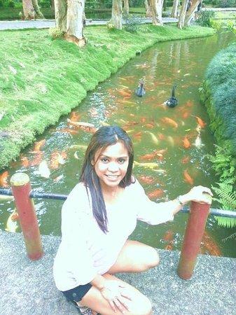 Byodo-In Temple : Fish feeding!