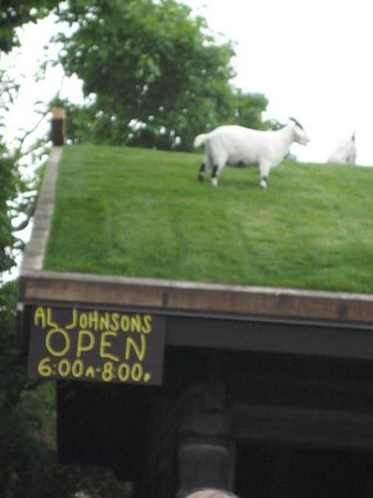 Al Johnson's Swedish Restaurant & Butik: Goat on the roof