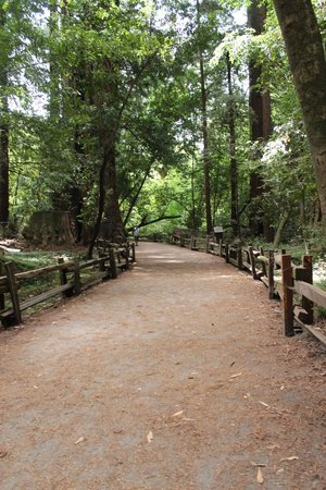 Henry Cowell Redwoods State Park: easy trail