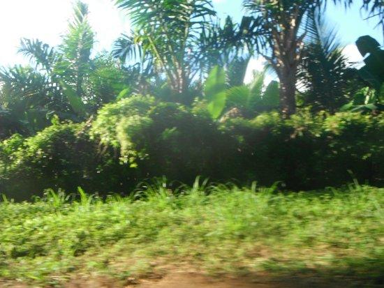Buggy Fun Rentals: jungle