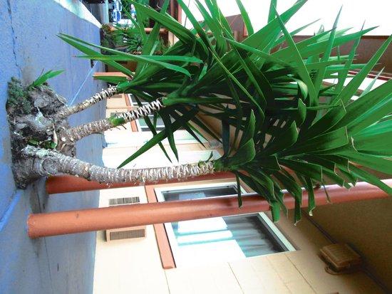 Classic Inn: the super cute tiny palm trees