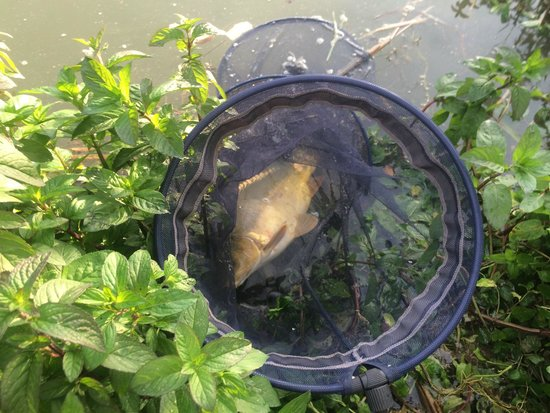 Hipark Serris-Val d'Europe : Fish caught in pond near hotel
